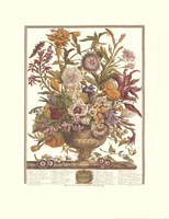 "September/Twelve Months of Flowers, 1730 by Robert Furber, 1730 - 17"" x 22"""