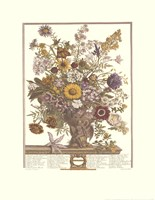 "November/Twelve Months of Flowers, 1730 by Robert Furber, 1730 - 17"" x 22"""