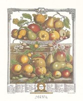"March/Twelve Months of Fruits, 1732 by Robert Furber, 1732 - 17"" x 22"""