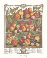 August/Twelve Months of Fruits, 1732 Fine Art Print