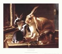 Curious Spectator Fine Art Print