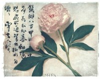 Oriental Peony Fine Art Print