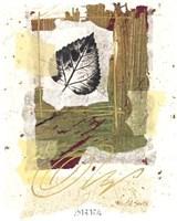 Leaf Study I Fine Art Print