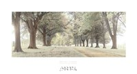 Avenue of Trees Fine Art Print