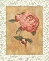 Antique Peony II Fine Art Print