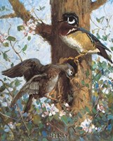 Spring (Wood Ducks) Fine Art Print