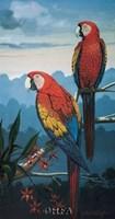 Scarlet Macaw Fine Art Print