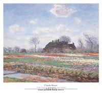 "Tulip Fields at Sassenheim by Claude Monet - 26"" x 23"""