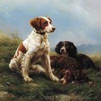 Companions Fine Art Print