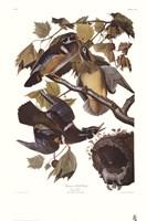 """Summer or Wood Duck by John James Audubon - 24"""" x 36"""""""