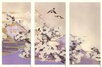 Chrysanthemums Fine Art Print