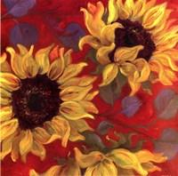 """Sunflower II by Shari White - 12"""" x 12"""""""