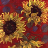 """Sunflower II by Shari White - 24"""" x 24"""", FulcrumGallery.com brand"""
