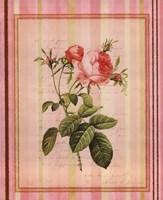 Botanical Rose I Framed Print