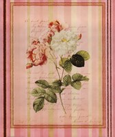 Botanical Rose II Framed Print