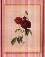 Botanical Rose III Framed Print