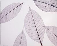 Sheer Leaves I Framed Print