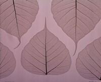 Sheer Leaves II Framed Print