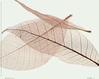 Sheer Leaves IV Fine Art Print