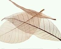 Sheer Leaves IV Framed Print