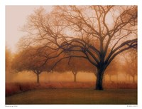 "Memory of Trees by M. Ellen Cocose - 26"" x 20"""