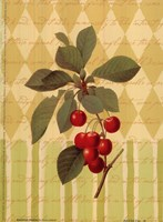 Botanical Cherries Fine Art Print