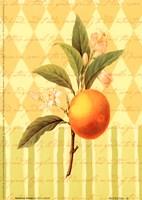 Botanical Orange Fine Art Print