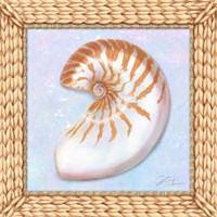 Seashell I Fine Art Print