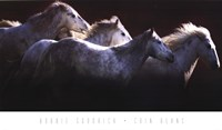 "Crin Blanc by Bobbie Goodrich - 36"" x 21"""
