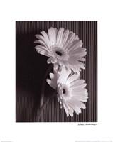 Fresh Cut Gerbera Daisy I Fine Art Print