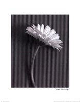 Fresh Cut Gerbera Daisy III Fine Art Print
