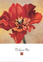 Tulipan One Fine Art Print