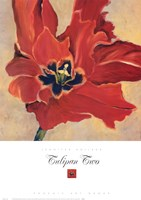 Tulipan Two Fine Art Print