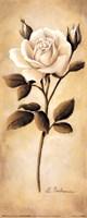 White Roses II Fine Art Print
