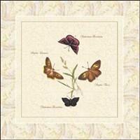 Papilio II Fine Art Print