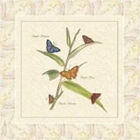 Papilio III Framed Print