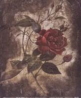 Vintage Rose II (Sm) Fine Art Print