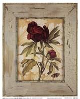 Antique Botanicals V Fine Art Print
