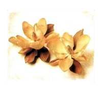 Still Life With Magnolia Fine Art Print