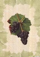 Antique Grapes - Gougenot Fine Art Print
