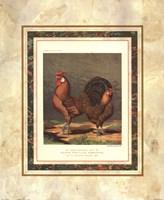 Golden Pencilled Hamburghs Fine Art Print