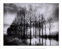Trees in Normandy Fine Art Print