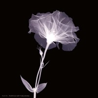 "Bud in Bloom by Alfred Augustus Glendenning Jr. - 6"" x 6"""