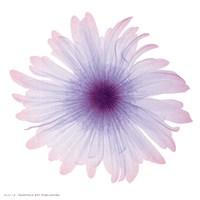 Iced Bloom Fine Art Print