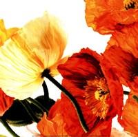 """Poppies III by Richard Weinstein - 12"""" x 12"""" - $9.99"""