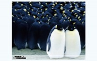 """March of the Penguins Together - 17"""" x 11"""""""