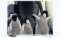 """March of the Penguins Babies having Fun - 17"""" x 11"""""""