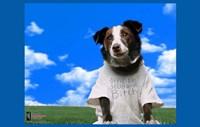 "Everything is Illuminated - dog - 17"" x 11"", FulcrumGallery.com brand"