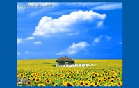 "Everything is Illuminated - flower field - 17"" x 11"", FulcrumGallery.com brand"