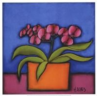 """Orquidia Rosa by H. Alves - 16"""" x 16"""""""
